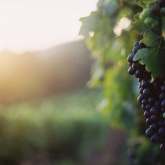 Ρέθυμνο: Γευσιγνωσία κρητικού κρασιού υπό το φως του φεγγαριού