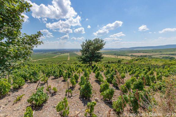 Οι δρόμοι του κρασιού στη Θεσσαλία