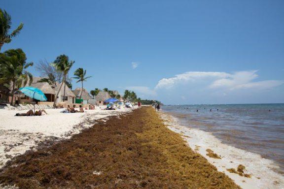 Καραϊβική: Οι εντυπωσιακές παραλίες έχουν γεμίσει φύκια!