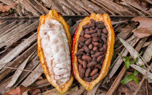Το «μαγικό» της  καλύτερης σοκολάτας του κόσμου κρυμένο στο Μαρανιόν Κάνυον