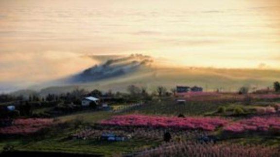 Ιάπωνες τουρίστες προσελκύουν φέτος οι ανθισμένες ροδακινιές της Βέροιας